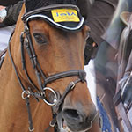 guide des sports equestres en Normandie